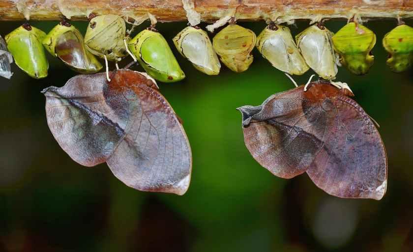 nature macro butterfly larva