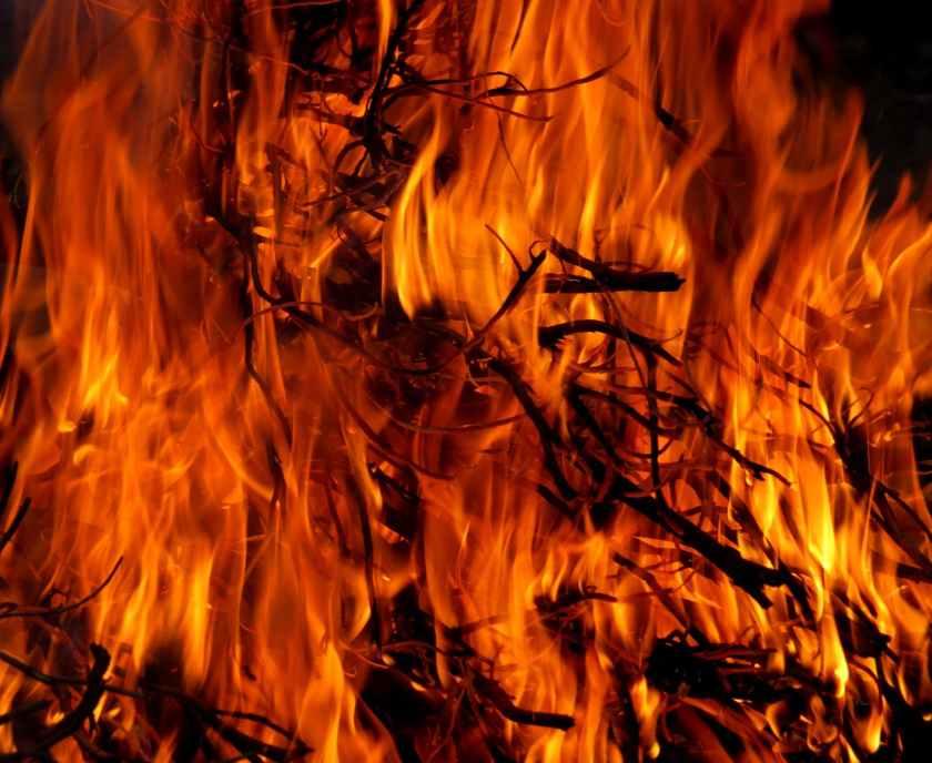 burning tree in time lapse