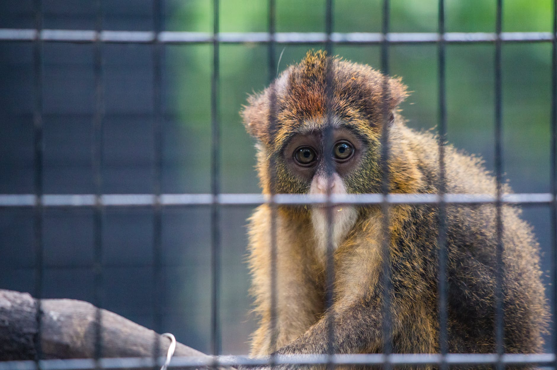 selective photography of primate