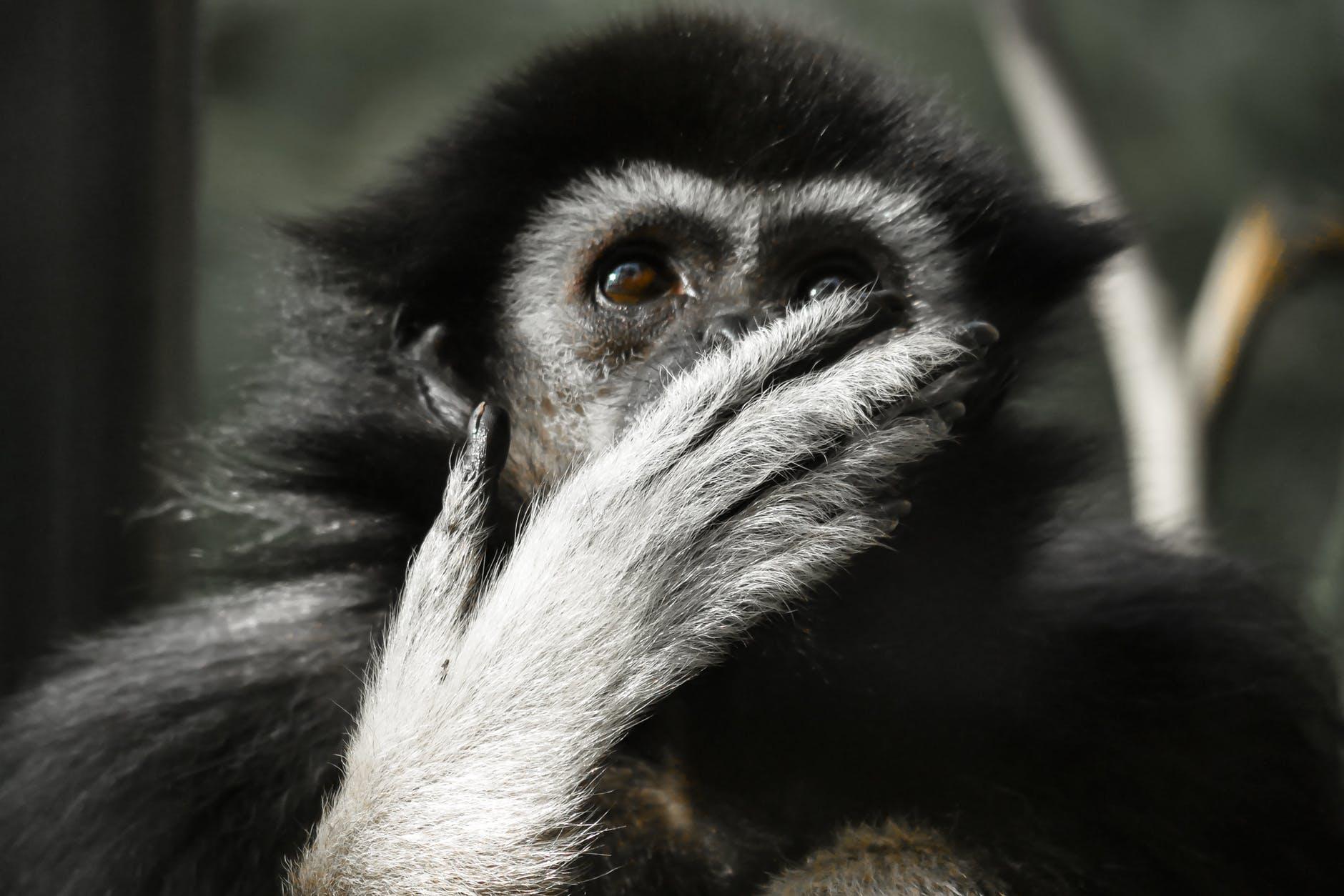 animal animal photography close up cute