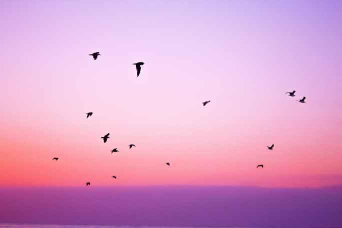 nature sky bird animals
